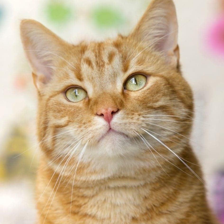 Cat Sitting in Warrington